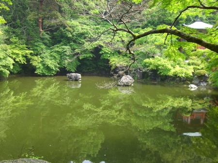 醍醐寺池.jpg